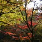 秋の花貫渓谷&横川温泉を満喫しました